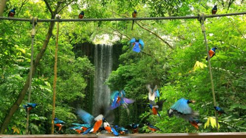 Inside the jurong bird park