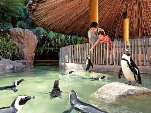 Jurong bird park pinguins