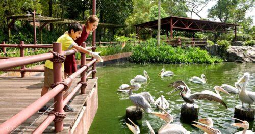 Things to do at jurong bird park