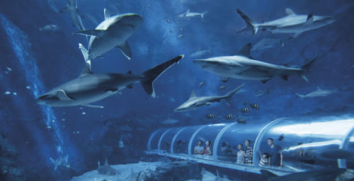 S e a aquarium sentosa
