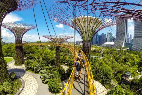Visit gardens by the bay
