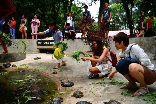 Tortoise sanctuary kusu island